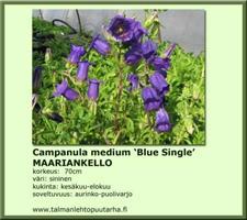 Maariankello  'Blue Single'
