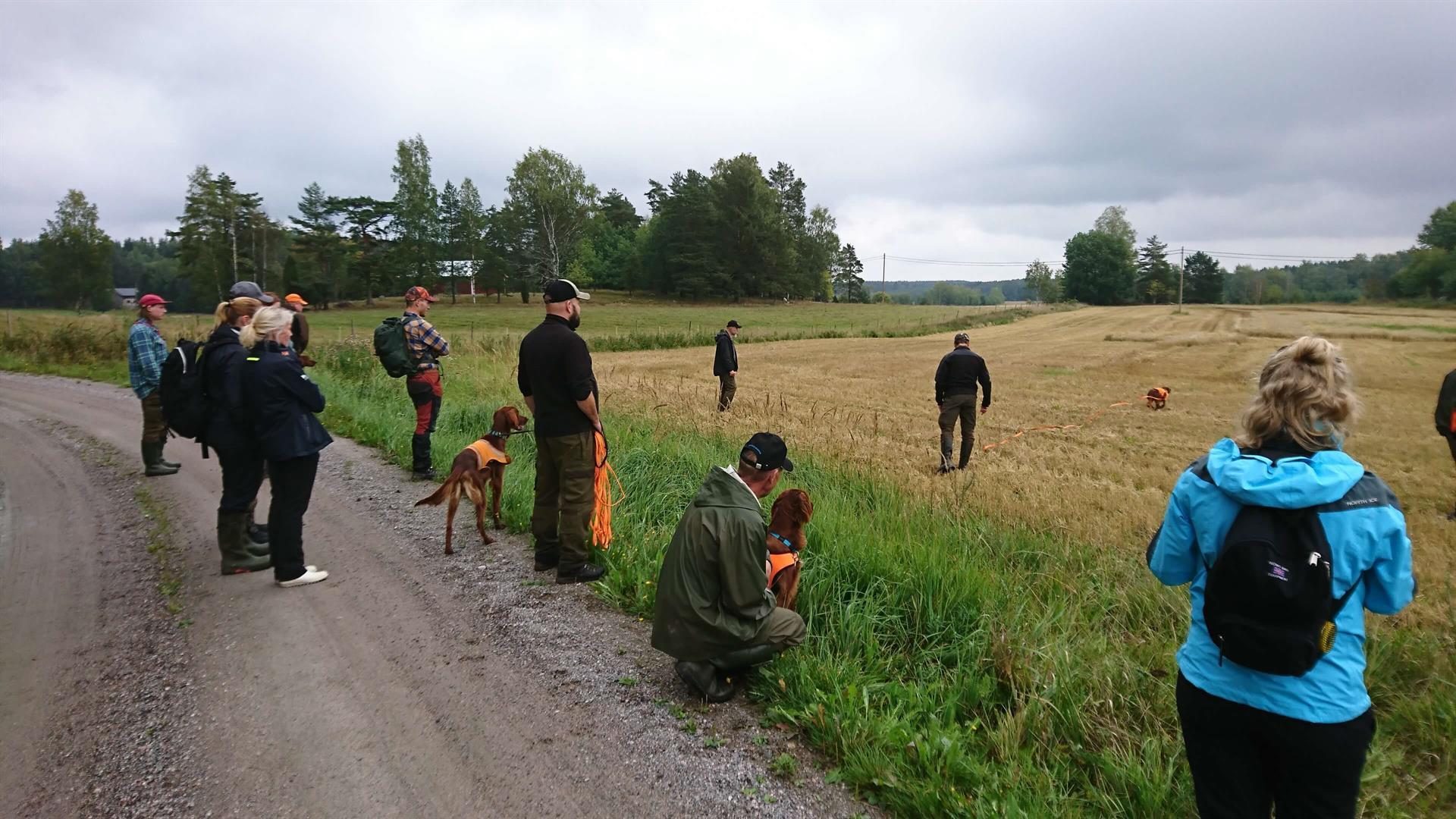 Koirien koulutus ja kokeet Norrbyssä