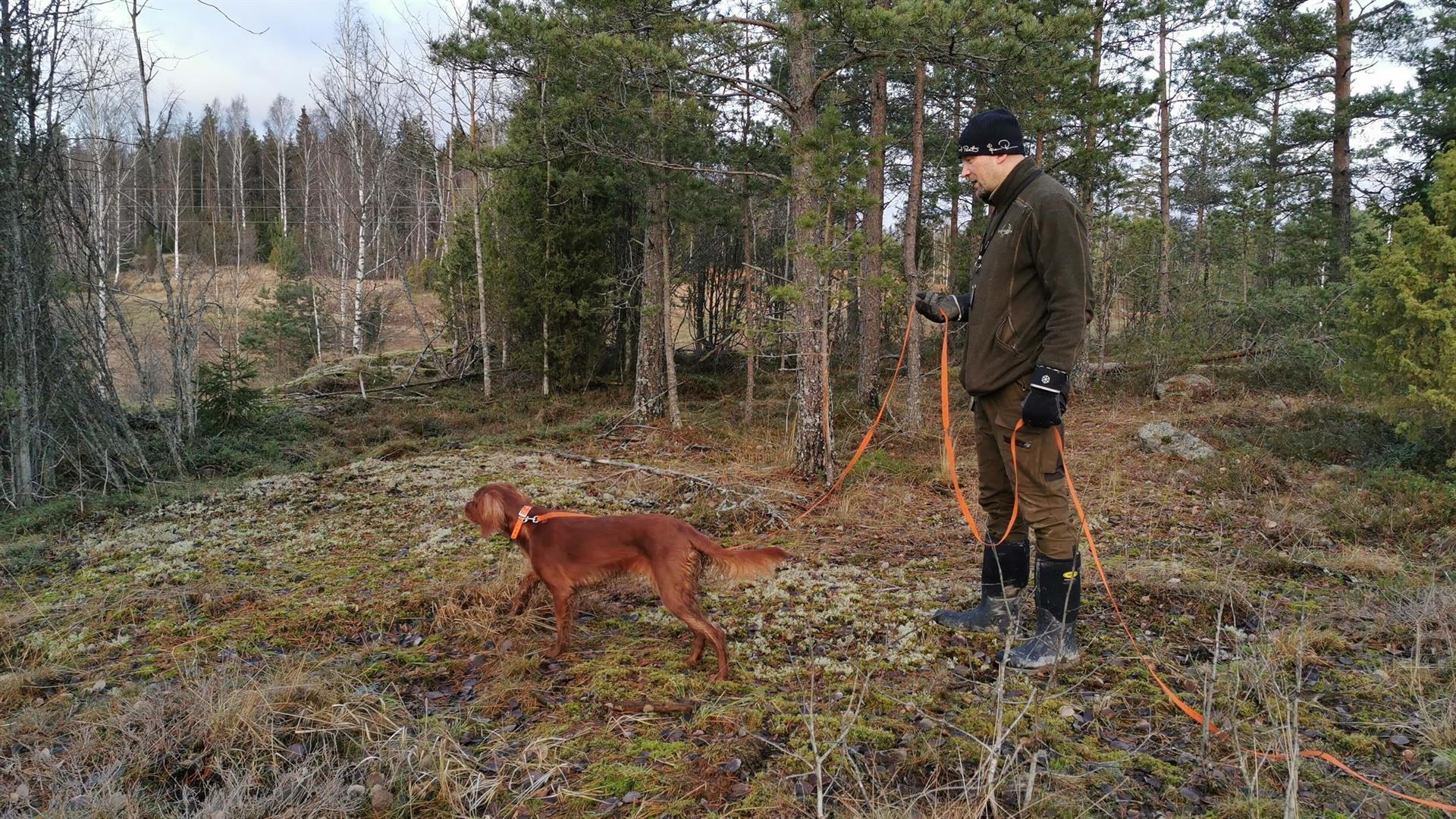 Koirien koulutus Norrby Gårdissa