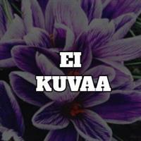 Lehtorikko rotundifolia