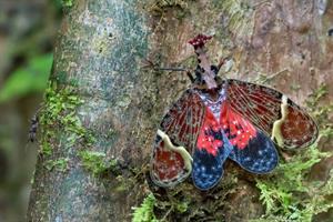 Drakhövdad strit Costa Rica