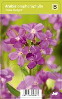 Kevätpitkäpalko 'Rose Delight'