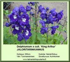 Jaloritarinkannus 'King Arthur'